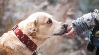 Les métiers autour des chiens